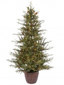 Potted Nevis Pine Dura-Lit Christmas Tree For Christmas 2014