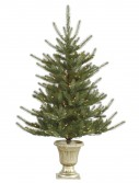 5 foot Potted Colorado Spruce Christmas Tree For Christmas 2014