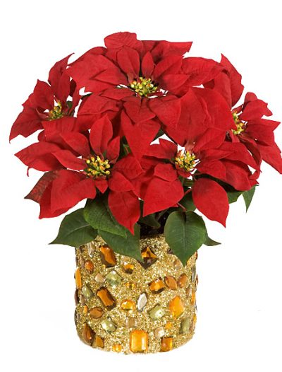 19 Inch Poinsettia Bush: Set of (12) For Christmas 2014